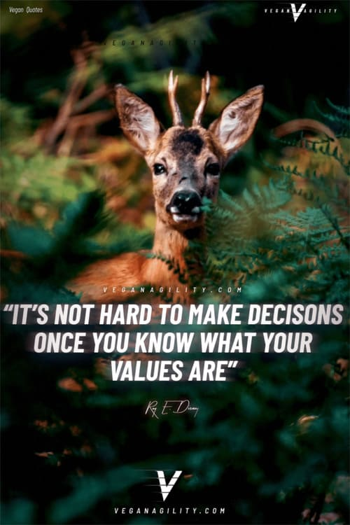 vegan quote 14