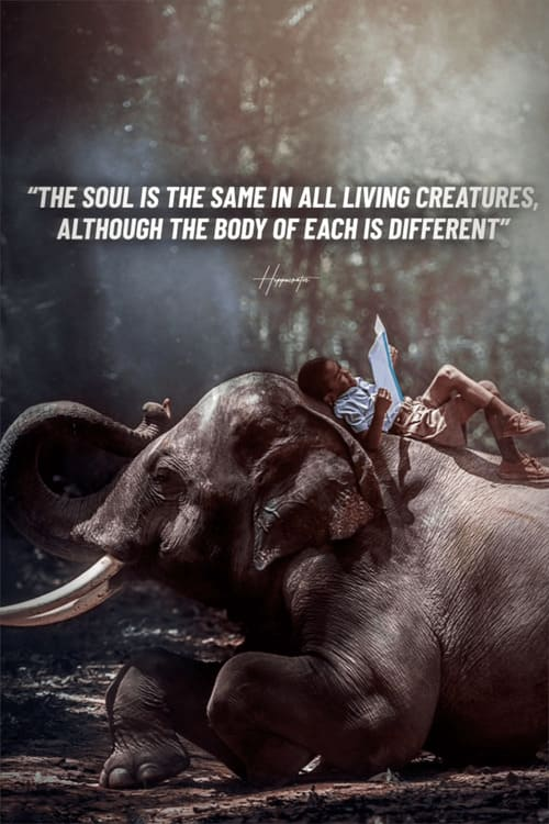 vegan quote 6