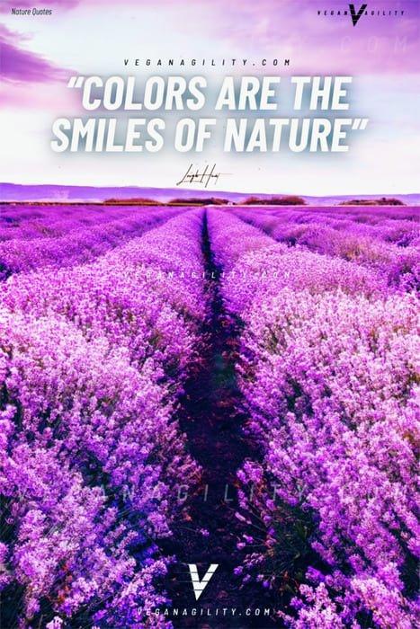 Nature quote 32
