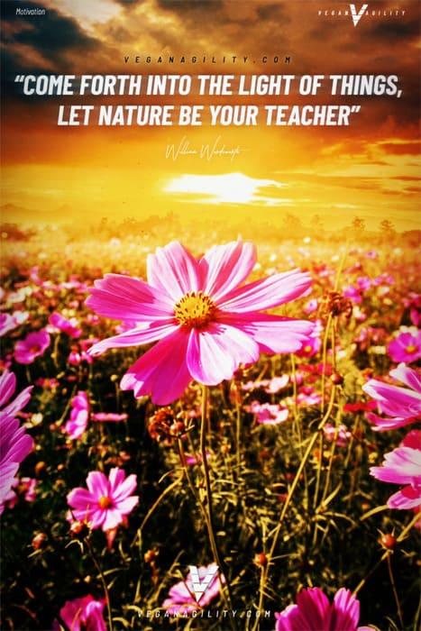 Nature quote 31