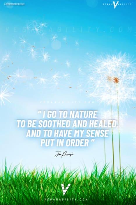 Nature quote 28