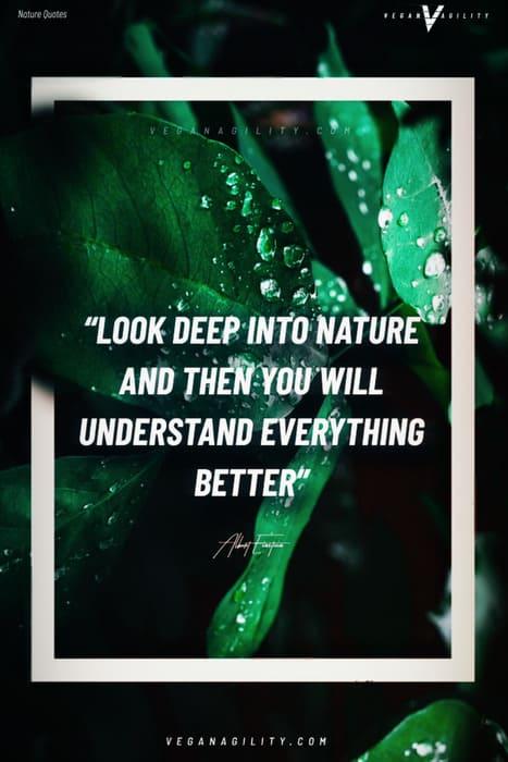 Nature quote 27