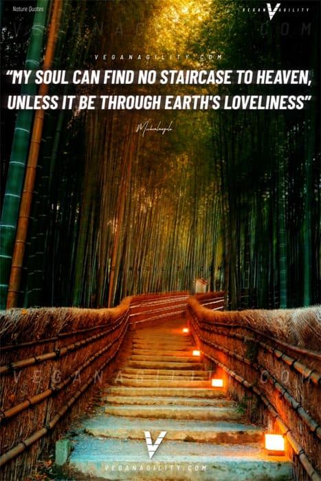 Nature quote 25