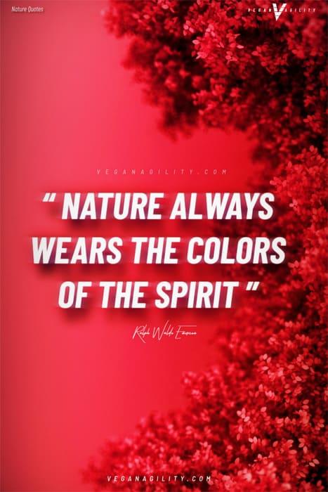 Nature quote 23
