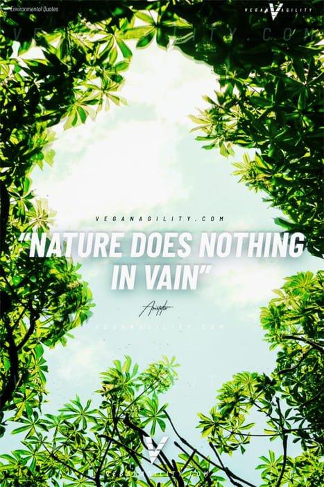 Nature quote 21