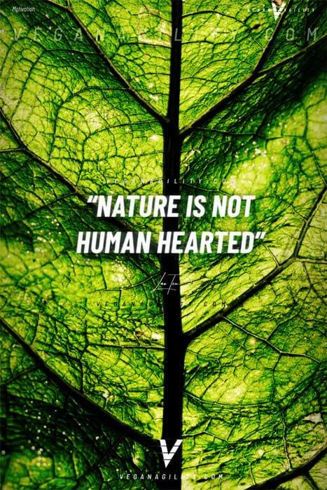 Nature quote 19