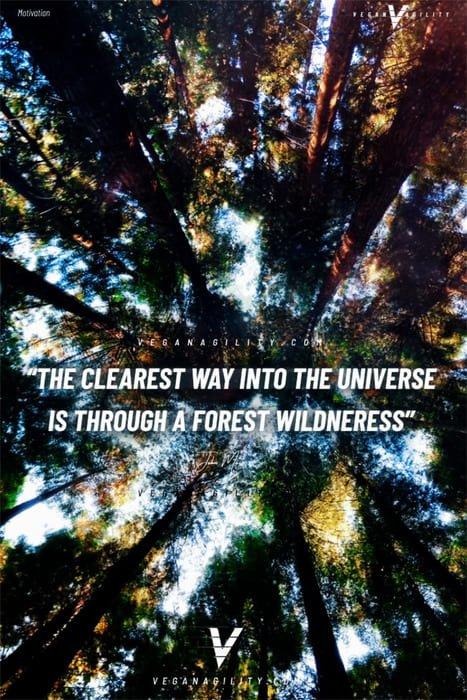 Nature quote 12