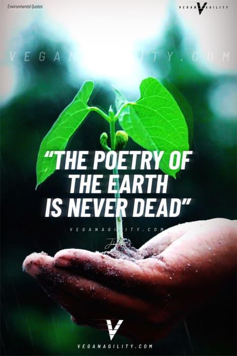 Nature quote 9