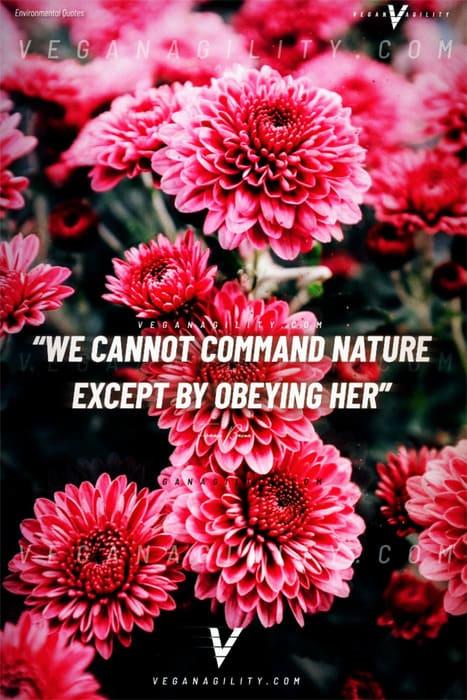 Nature quote 4