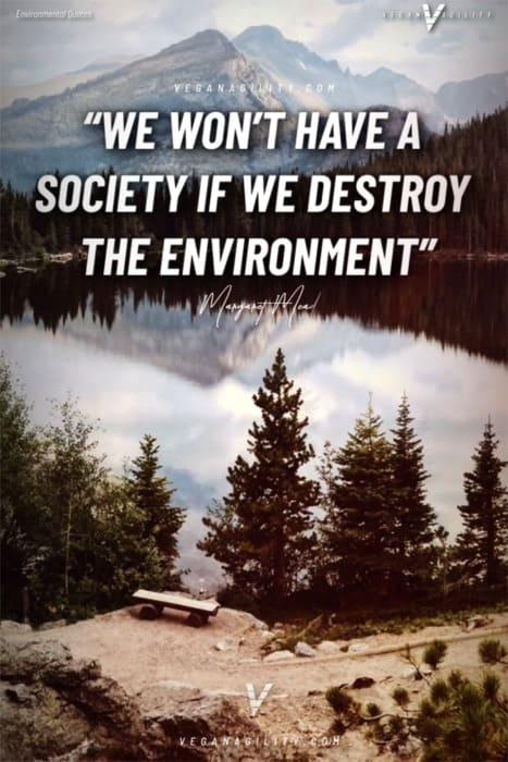environmental quote 19