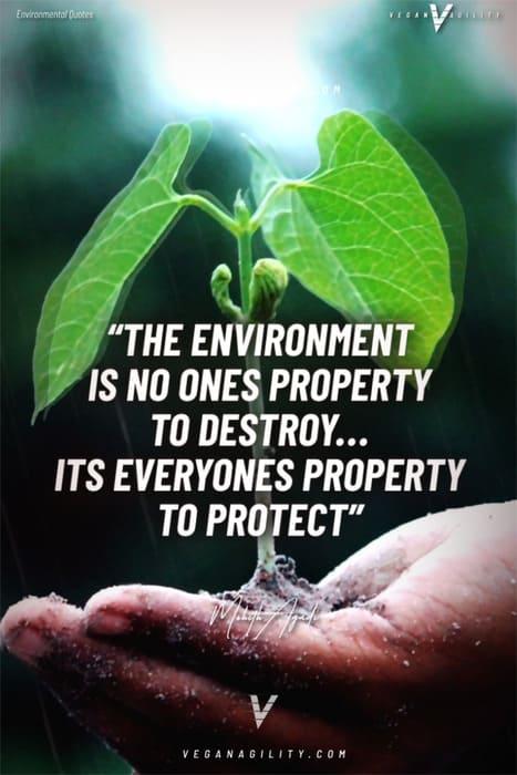 environmental quote 15